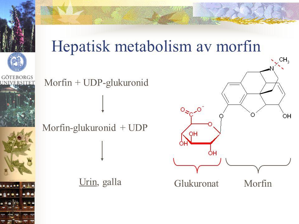 Hepatisk metabolism av morfin