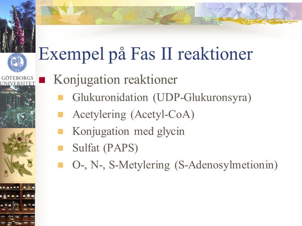 Exempel på Fas II reaktioner