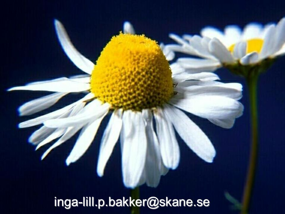 inga-lill.p.bakker@skane.se © Tandvårdsnämndens kansli, Ingalill Persson Bakker 2007-04-23