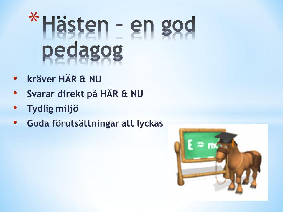 Hästen – en god pedagog kräver HÄR & NU Svarar direkt på HÄR & NU