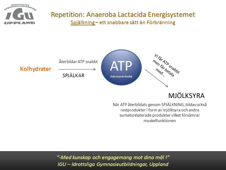 Repetition: Anaeroba Lactacida Energisystemet Spjälkning – ett snabbare sätt än Förbränning