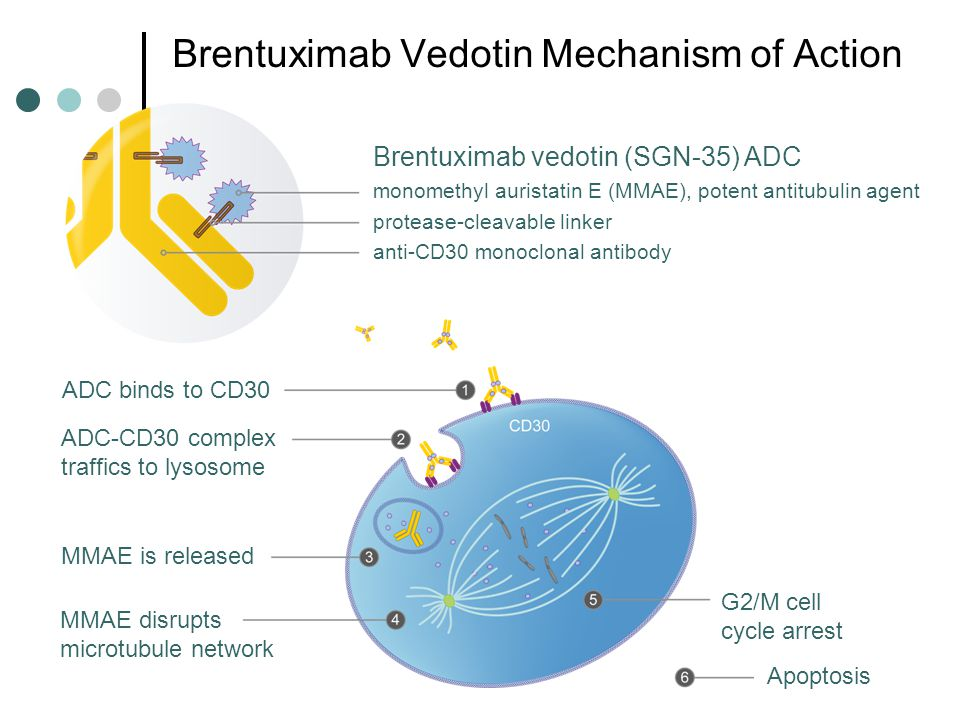 Brentuximab Vedotin Mechanism of Action