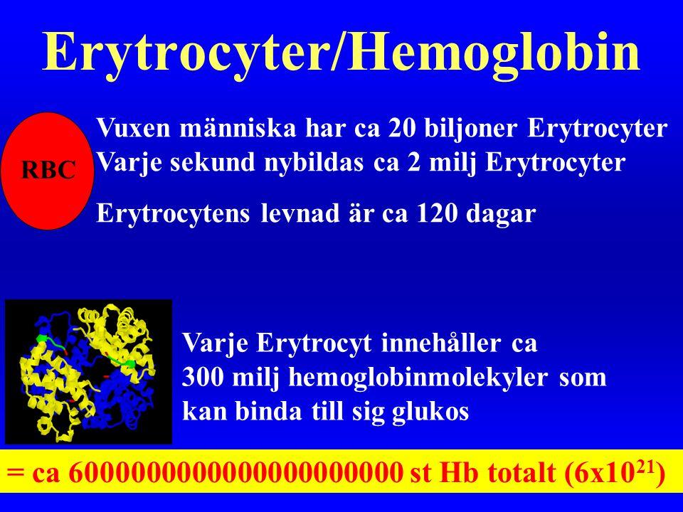 Erytrocyter/Hemoglobin
