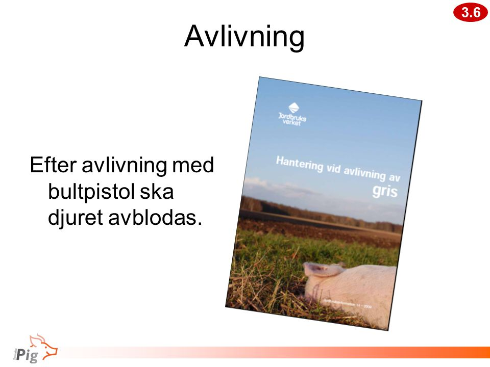 Avlivning Efter avlivning med bultpistol ska djuret avblodas. 3.6
