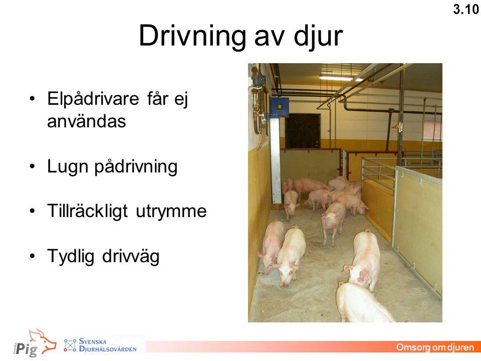 Drivning av djur Elpådrivare får ej användas Lugn pådrivning