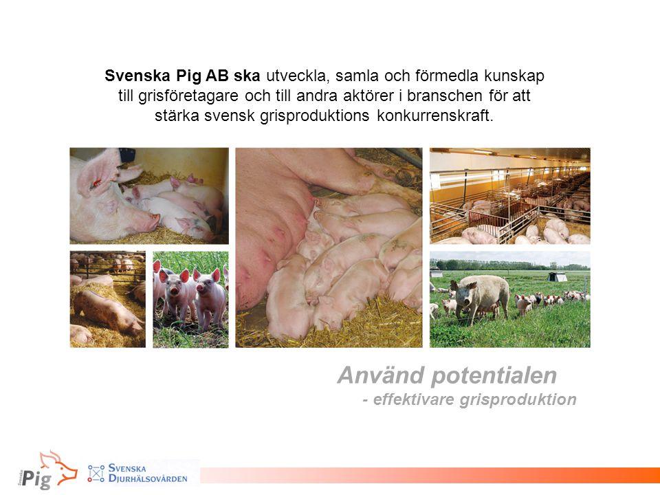 Svenska Pig AB ska utveckla, samla och förmedla kunskap till grisföretagare och till andra aktörer i branschen för att stärka svensk grisproduktions konkurrenskraft.