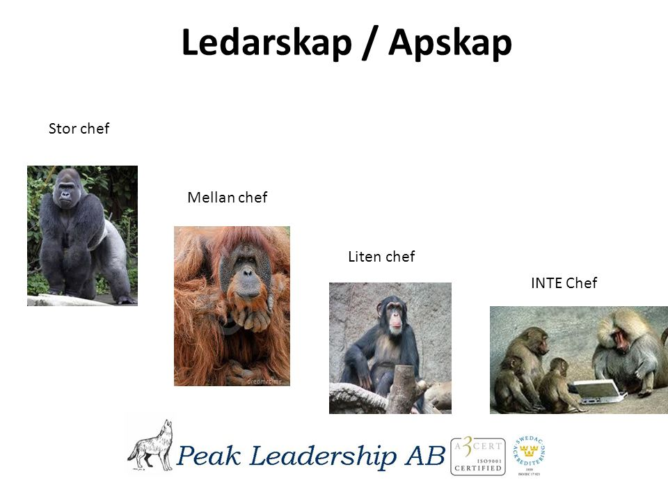 Ledarskap / Apskap Stor chef Mellan chef Liten chef INTE Chef
