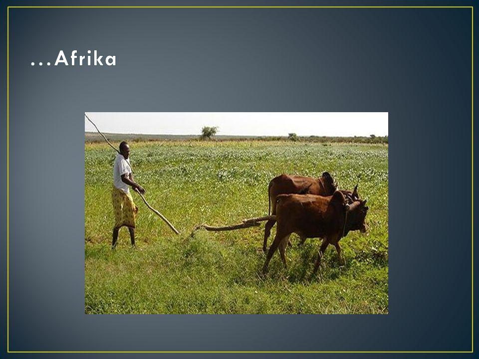 …Afrika