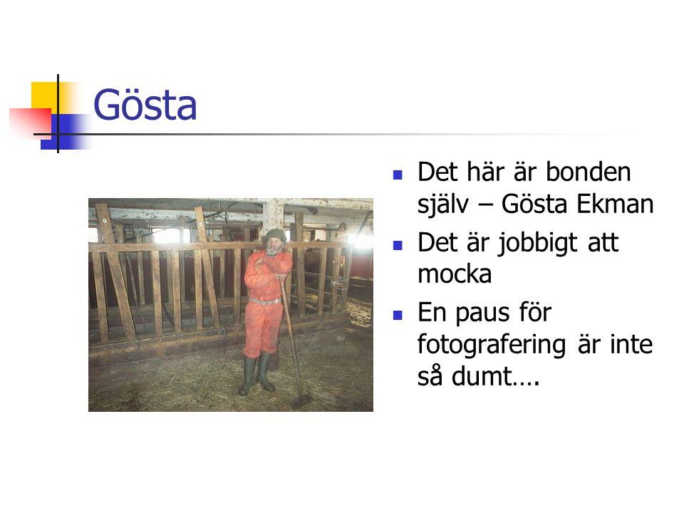 Gösta Det här är bonden själv – Gösta Ekman Det är jobbigt att mocka