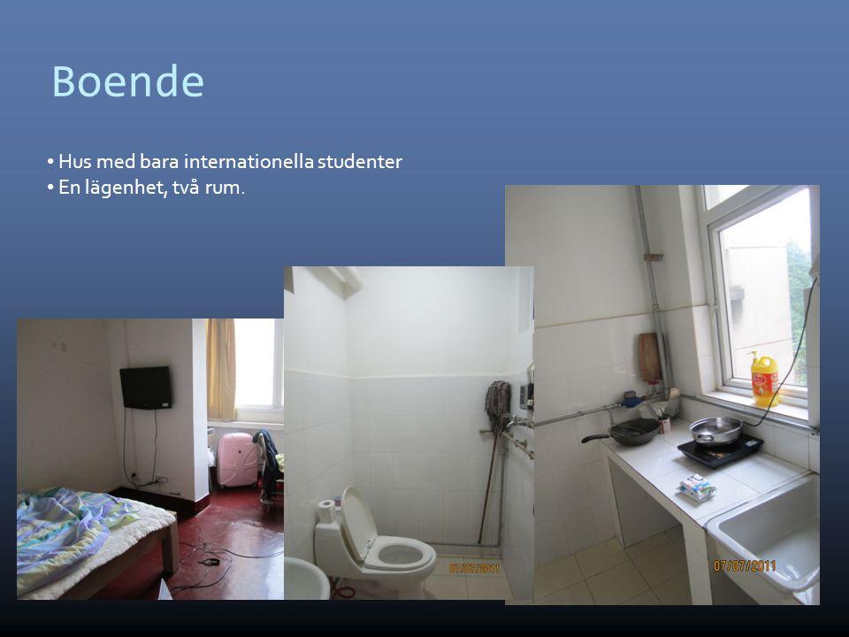 Boende Hus med bara internationella studenter En lägenhet, två rum. 4