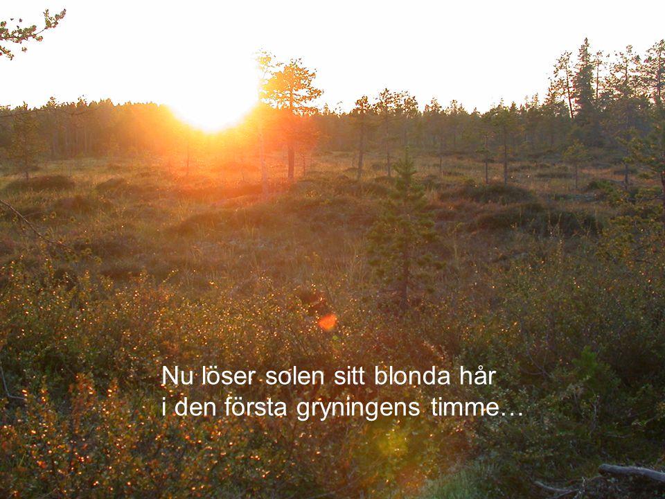 Nu löser solen sitt blonda hår