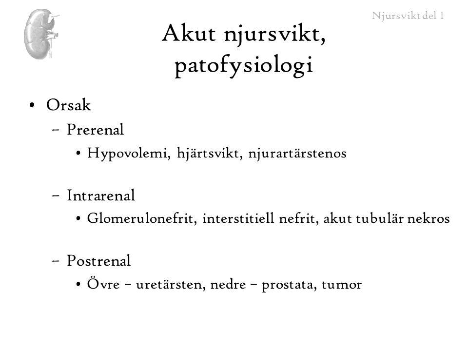 Akut njursvikt, patofysiologi