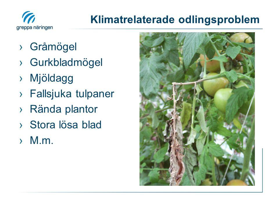 Klimatrelaterade odlingsproblem