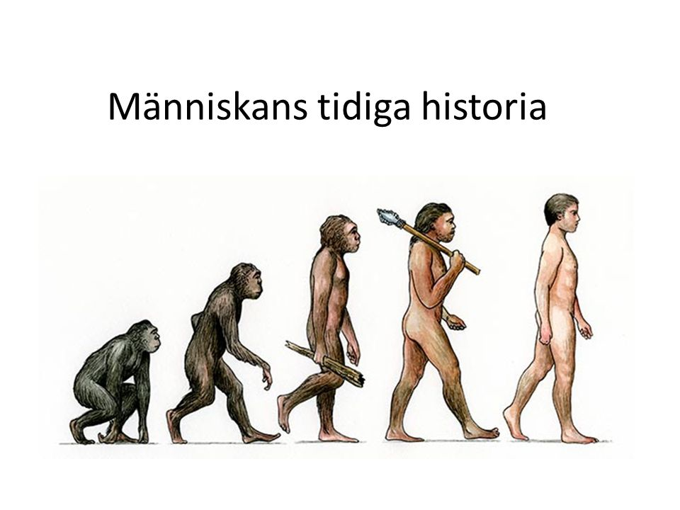 Människans tidiga historia