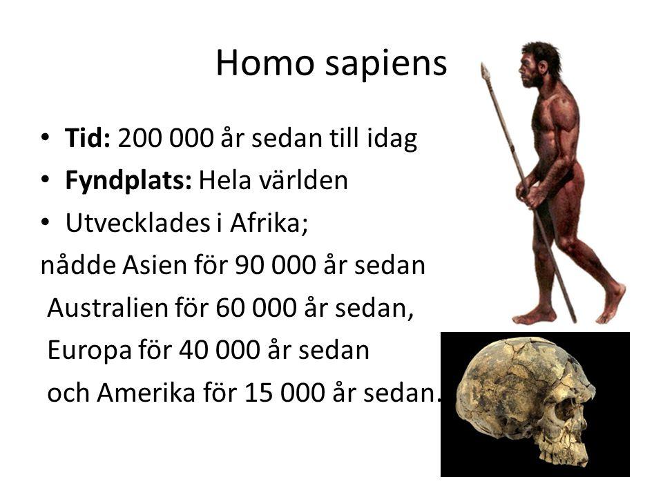 Homo sapiens Tid: 200 000 år sedan till idag Fyndplats: Hela världen