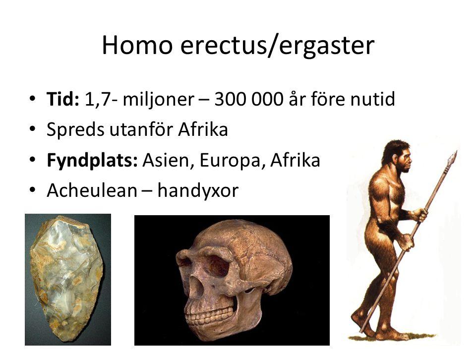 Homo erectus/ergaster