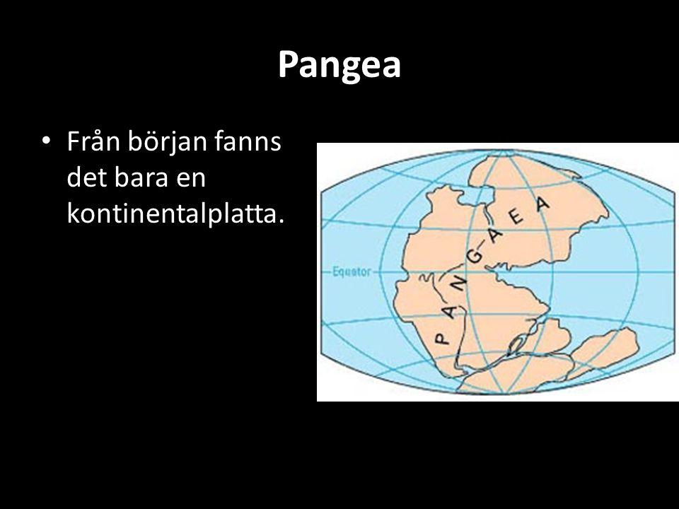 Pangea Från början fanns det bara en kontinentalplatta.