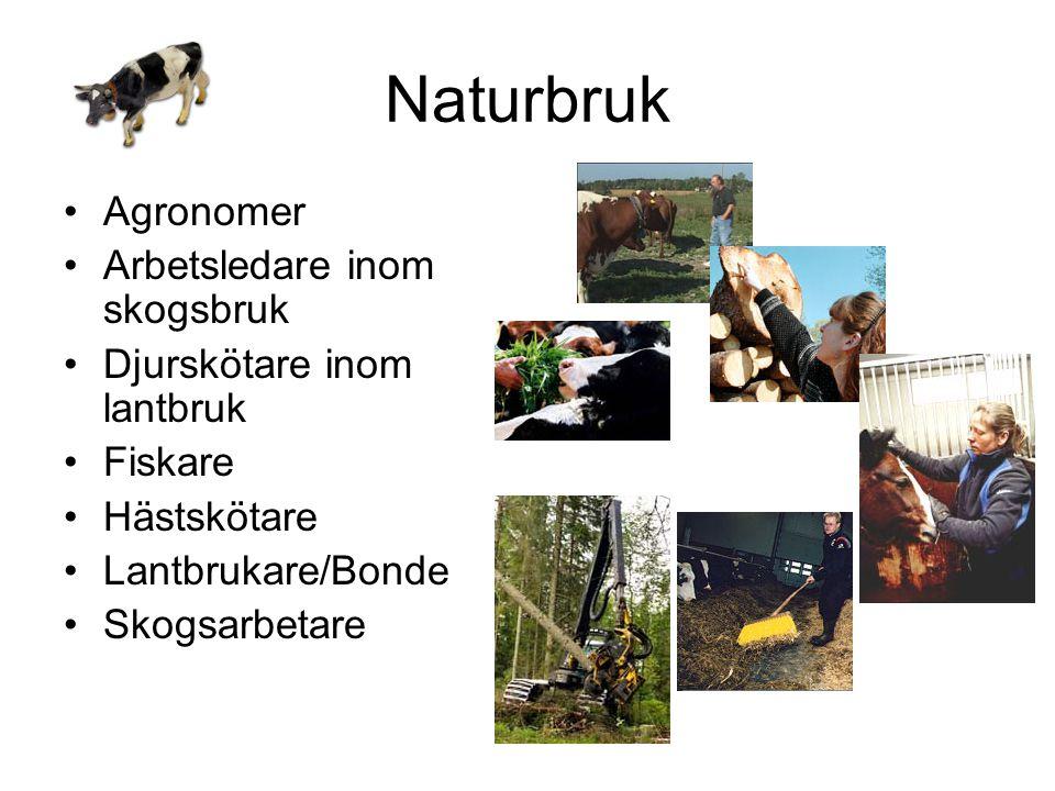 Naturbruk Agronomer Arbetsledare inom skogsbruk