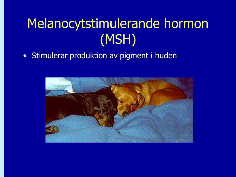Melanocytstimulerande hormon (MSH)