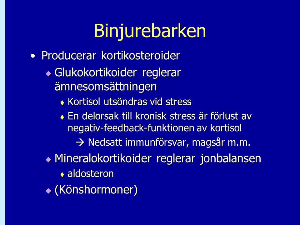 Binjurebarken Producerar kortikosteroider