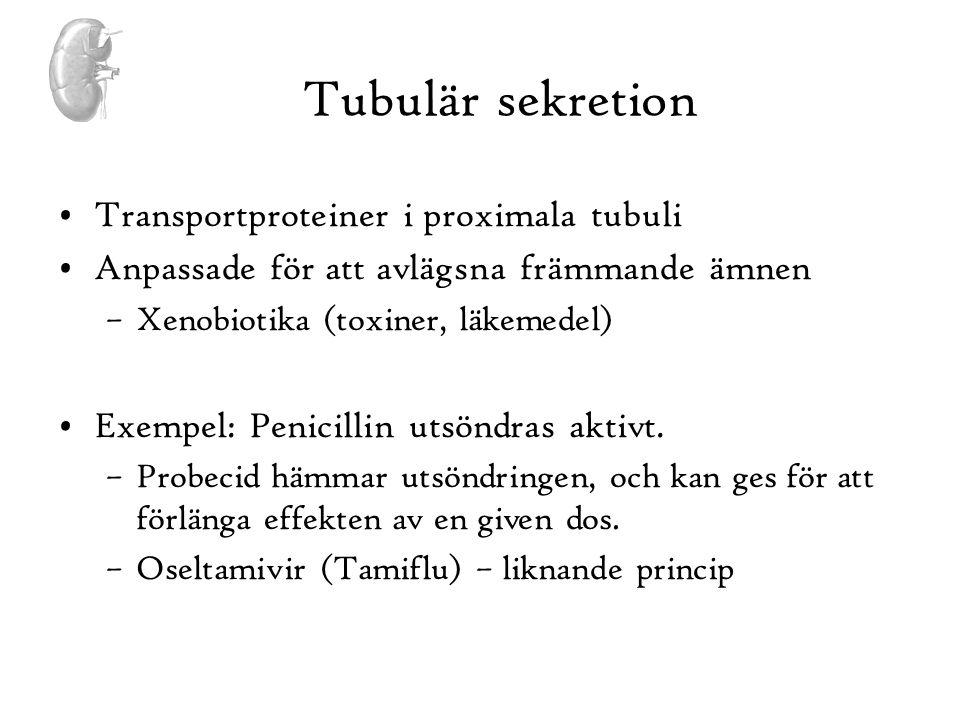Tubulär sekretion Transportproteiner i proximala tubuli