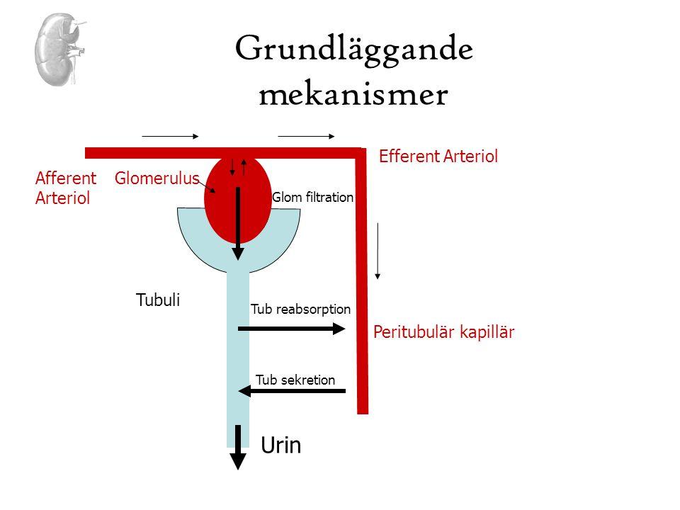 Grundläggande mekanismer