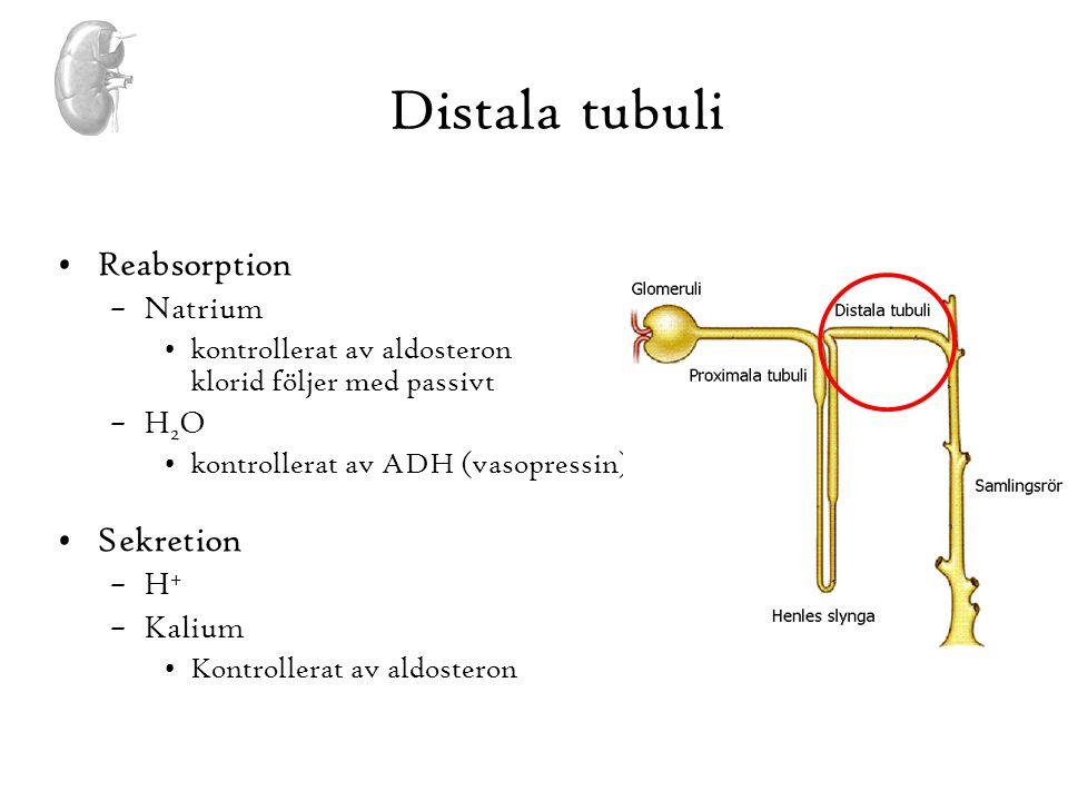 Distala tubuli Reabsorption Sekretion Natrium H2O H+ Kalium