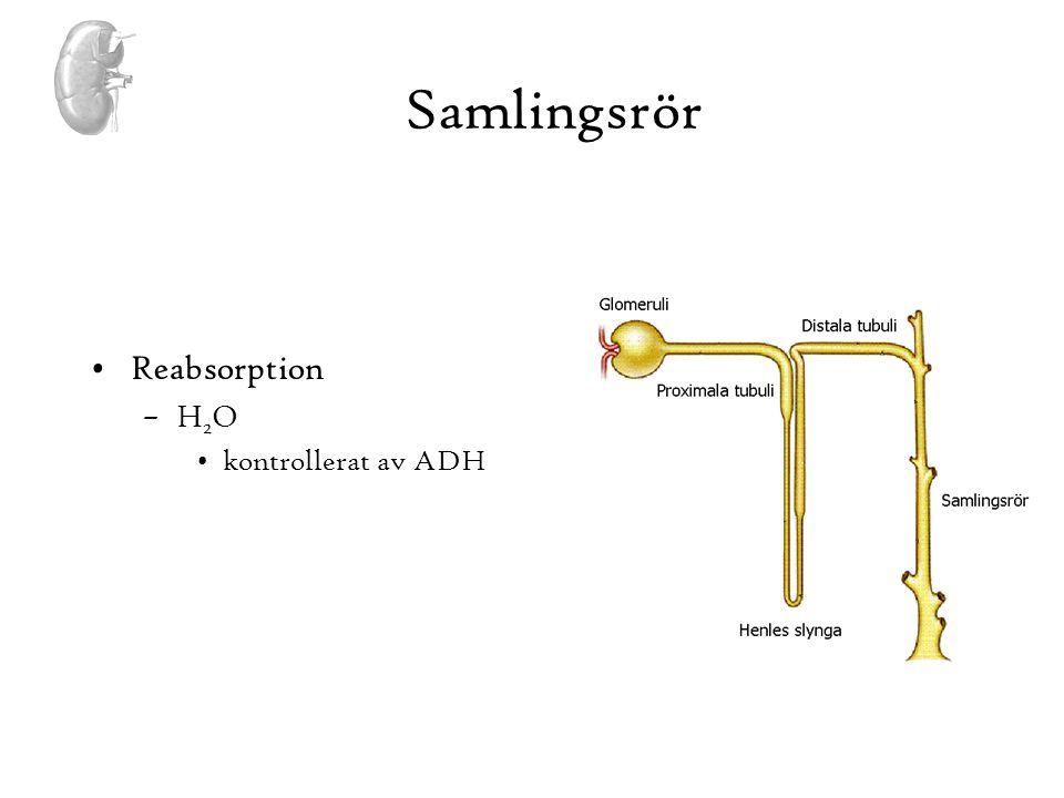 Samlingsrör Reabsorption H2O kontrollerat av ADH