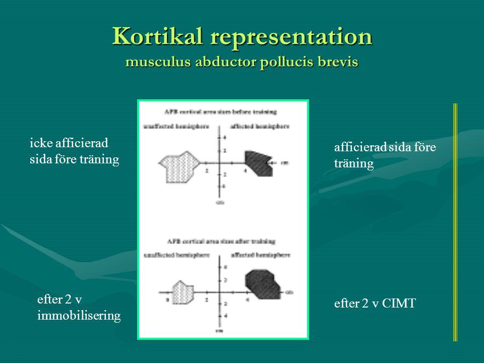Kortikal representation musculus abductor pollucis brevis