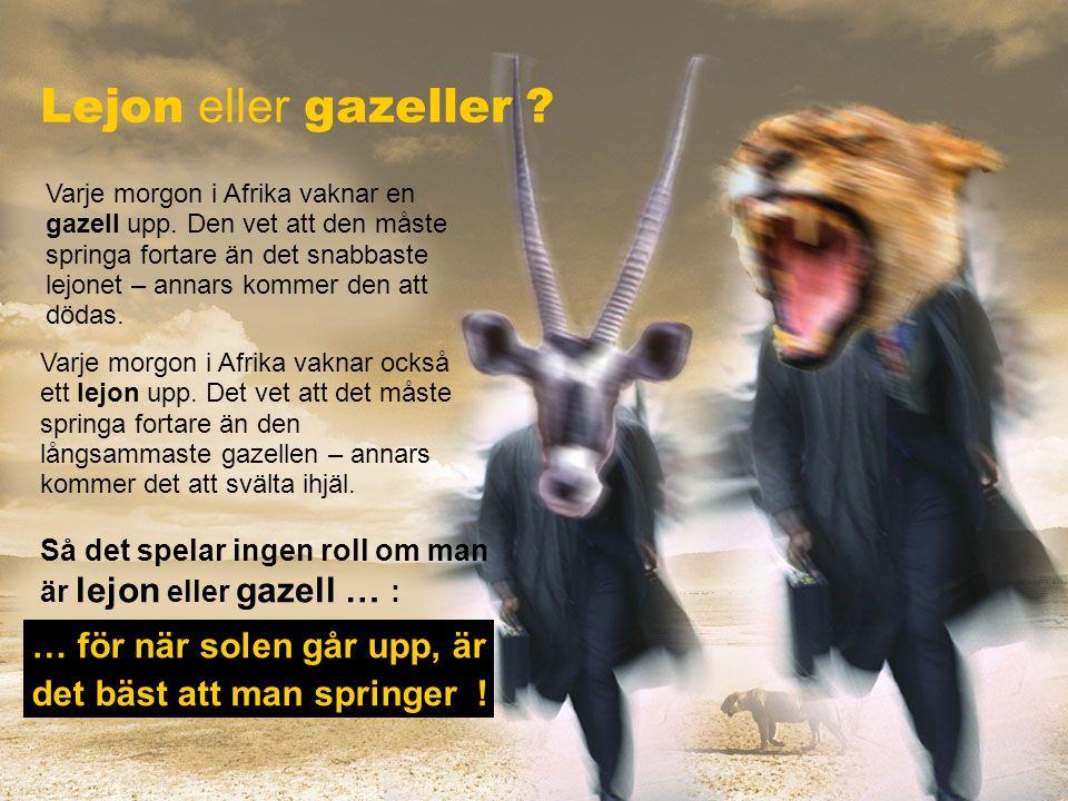 Lejon eller gazeller … för när solen går upp, är