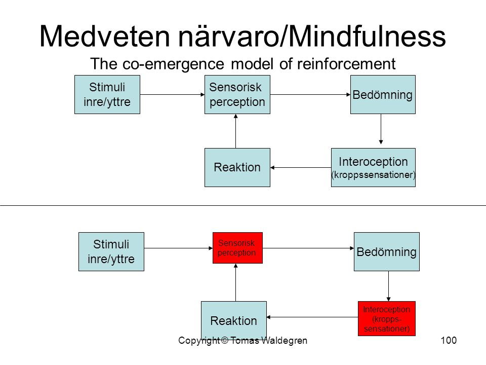 Medveten närvaro/Mindfulness The co-emergence model of reinforcement
