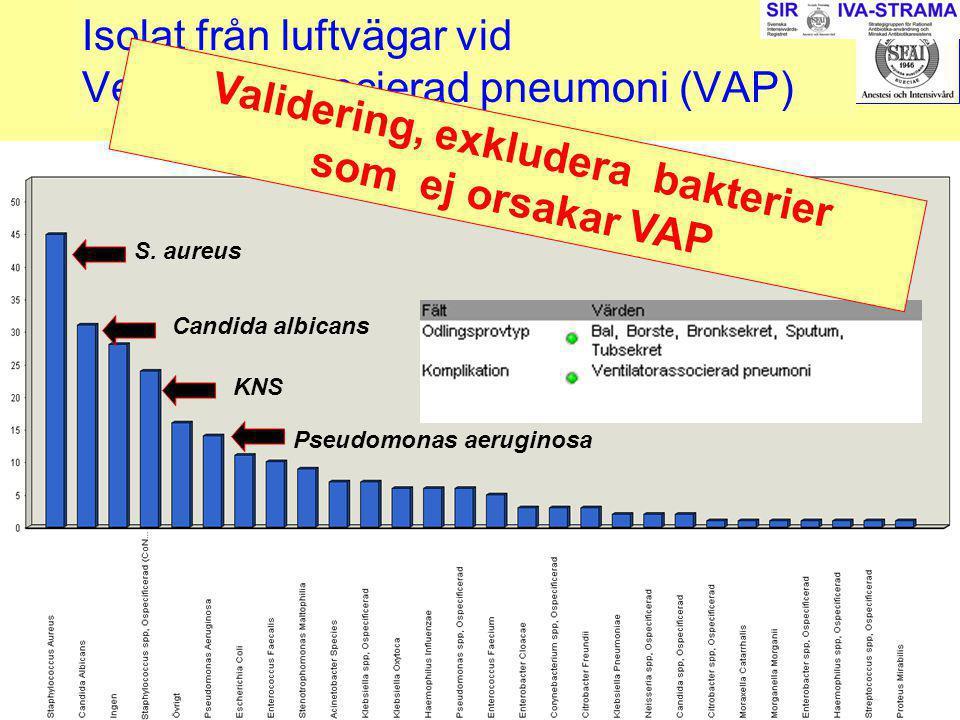 Isolat från luftvägar vid Ventilatorassocierad pneumoni (VAP)