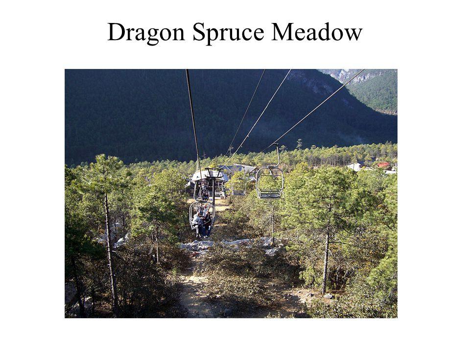 Dragon Spruce Meadow