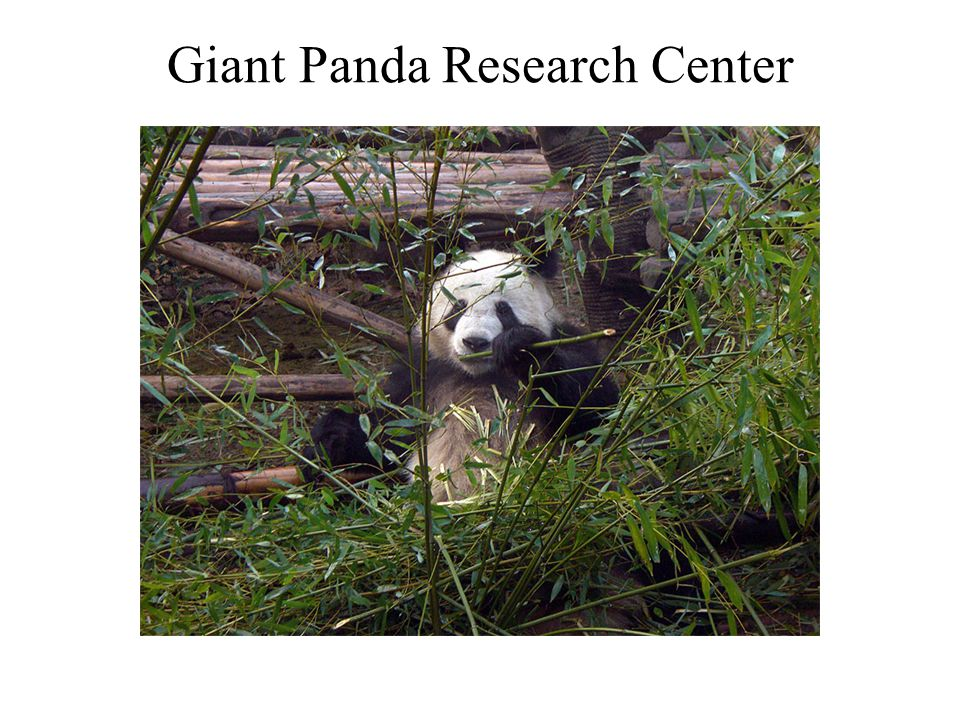Giant Panda Research Center