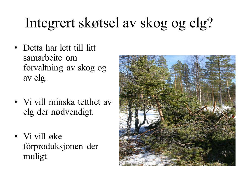 Integrert skøtsel av skog og elg