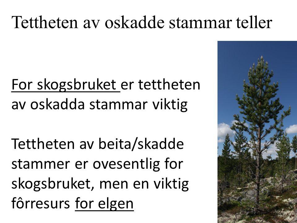 Tettheten av oskadde stammar teller For skogsbruket er tettheten av oskadda stammar viktig Tettheten av beita/skadde stammer er ovesentlig for skogsbruket, men en viktig fôrresurs for elgen
