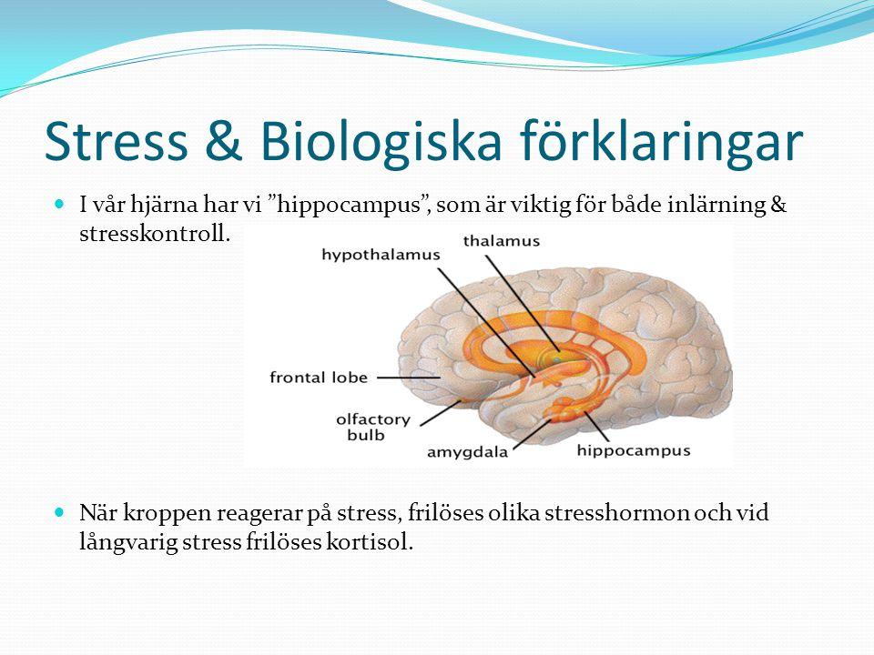 Stress & Biologiska förklaringar
