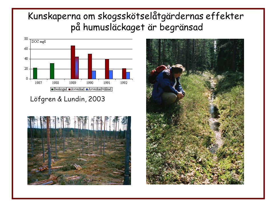 Kunskaperna om skogsskötselåtgärdernas effekter på humusläckaget är begränsad