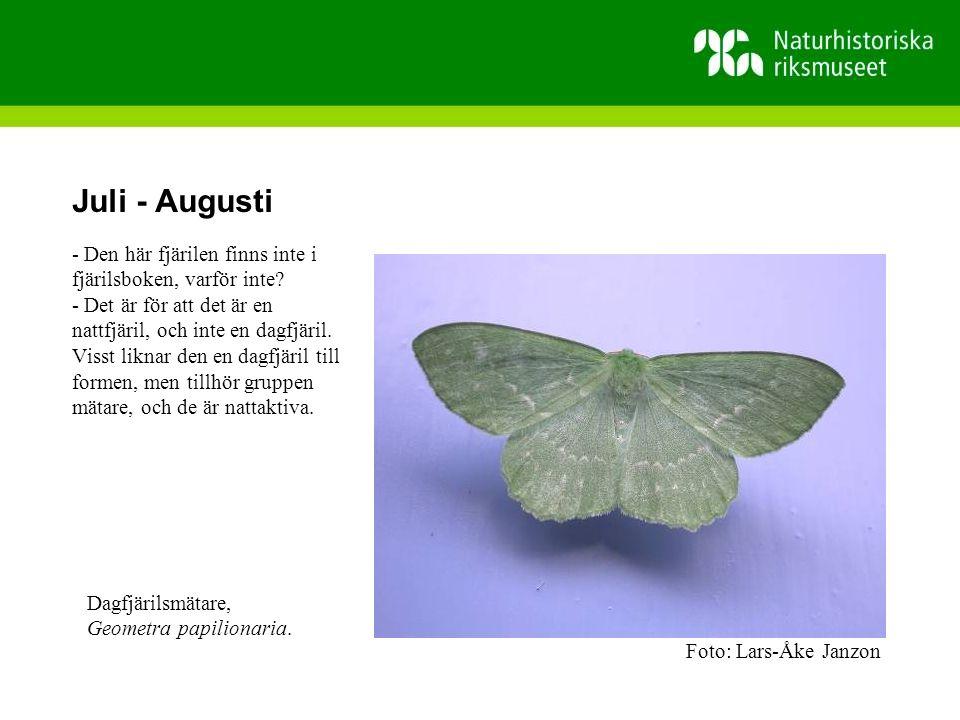 Juli - Augusti - Den här fjärilen finns inte i