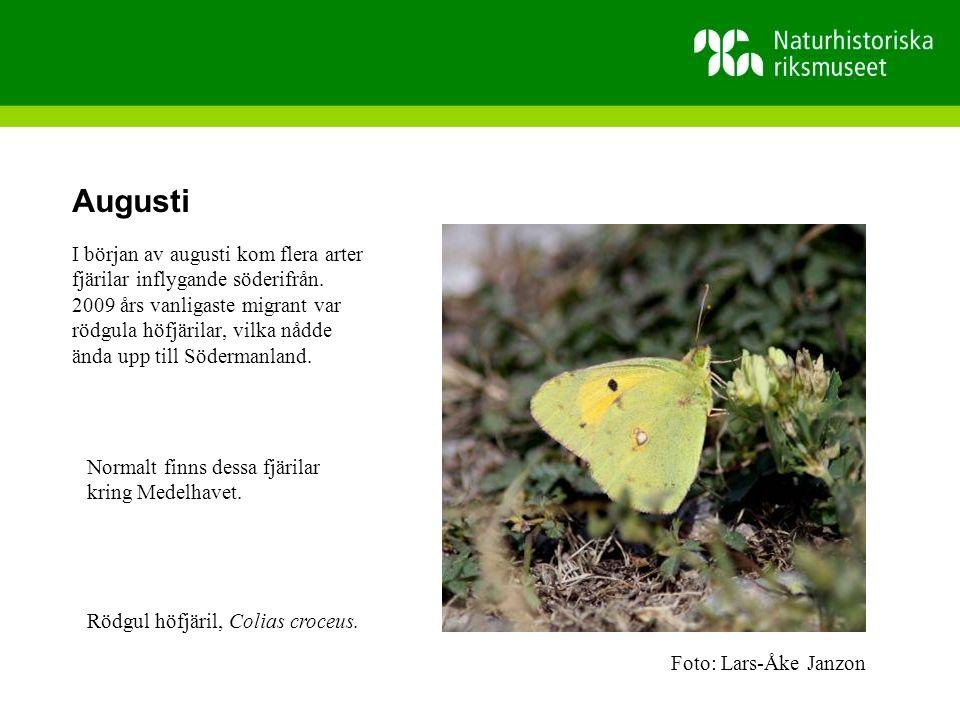 Augusti I början av augusti kom flera arter