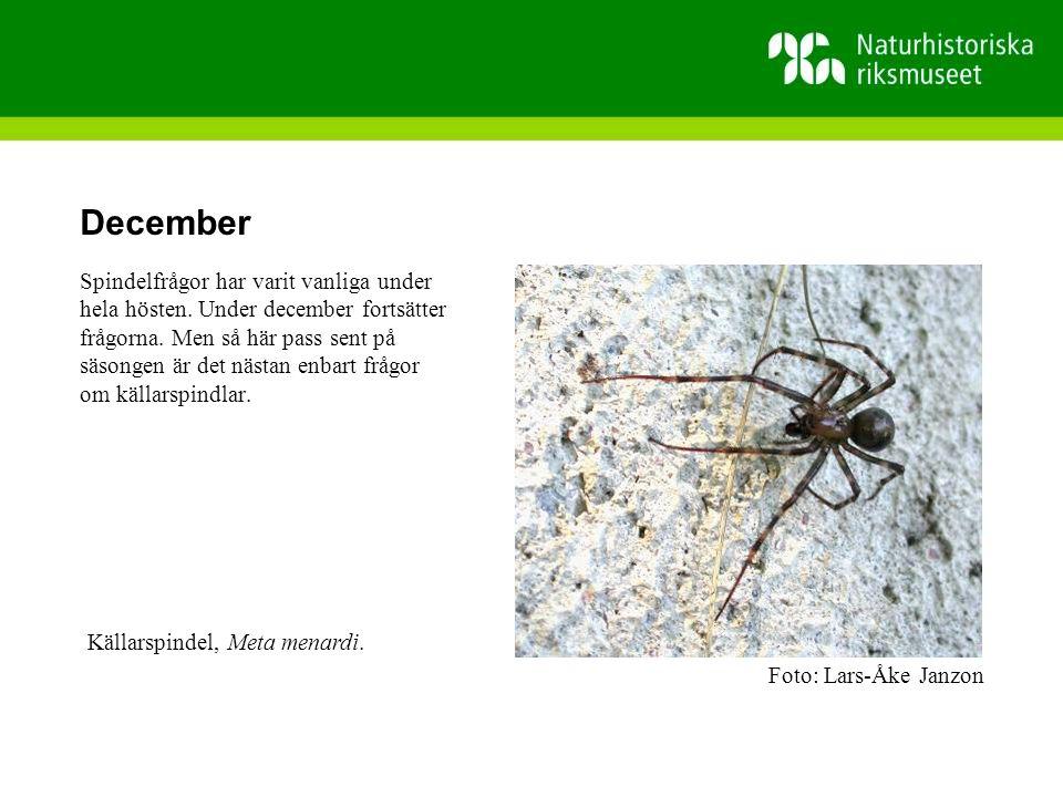 December Spindelfrågor har varit vanliga under