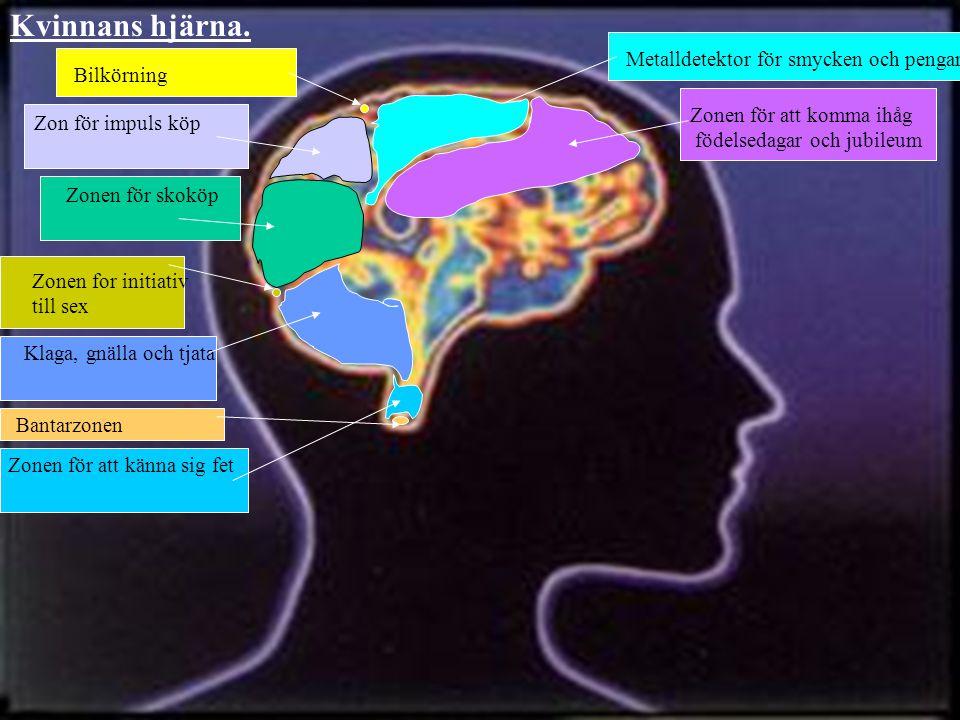 Kvinnans hjärna. Metalldetektor för smycken och pengar Bilkörning