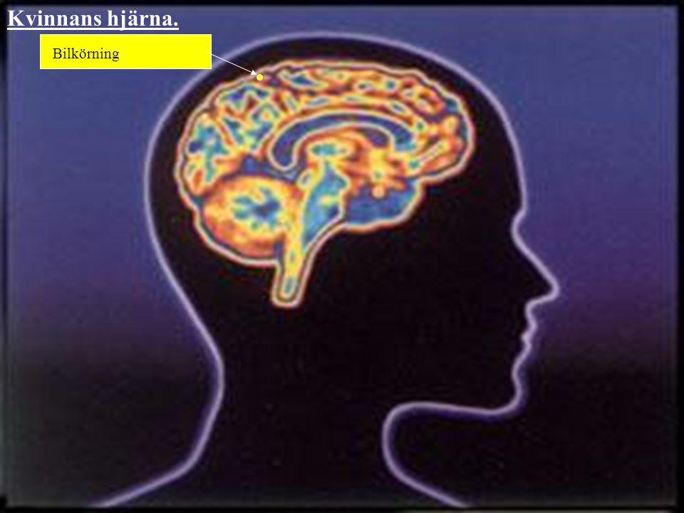 Kvinnans hjärna. Bilkörning