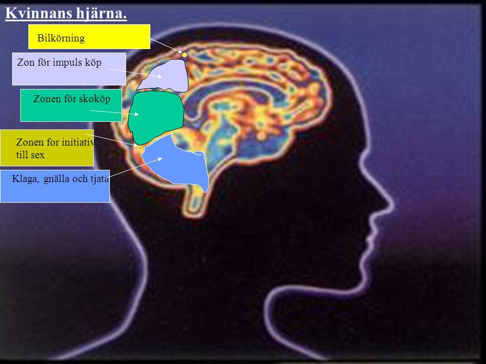 Kvinnans hjärna. Bilkörning Zon för impuls köp Zonen för skoköp