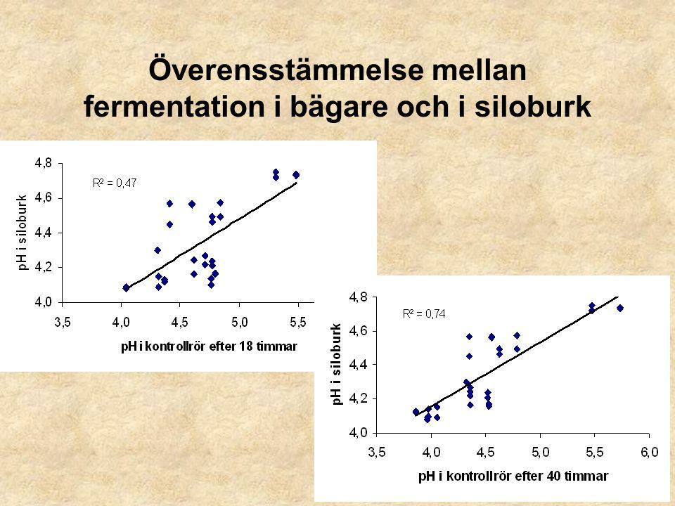 Överensstämmelse mellan fermentation i bägare och i siloburk