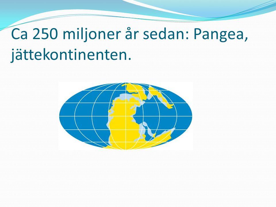 Ca 250 miljoner år sedan: Pangea, jättekontinenten.