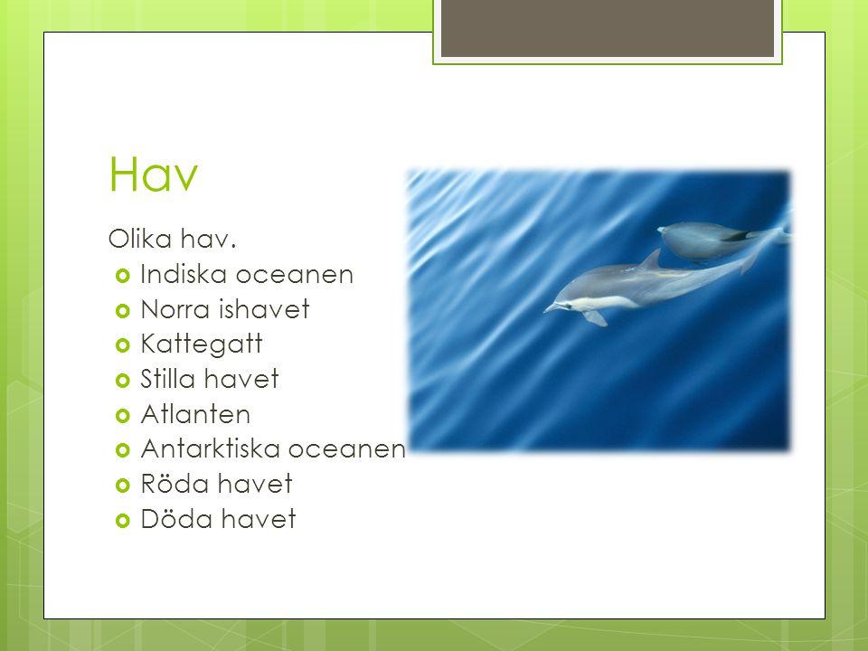 Hav Olika hav. Indiska oceanen Norra ishavet Kattegatt Stilla havet