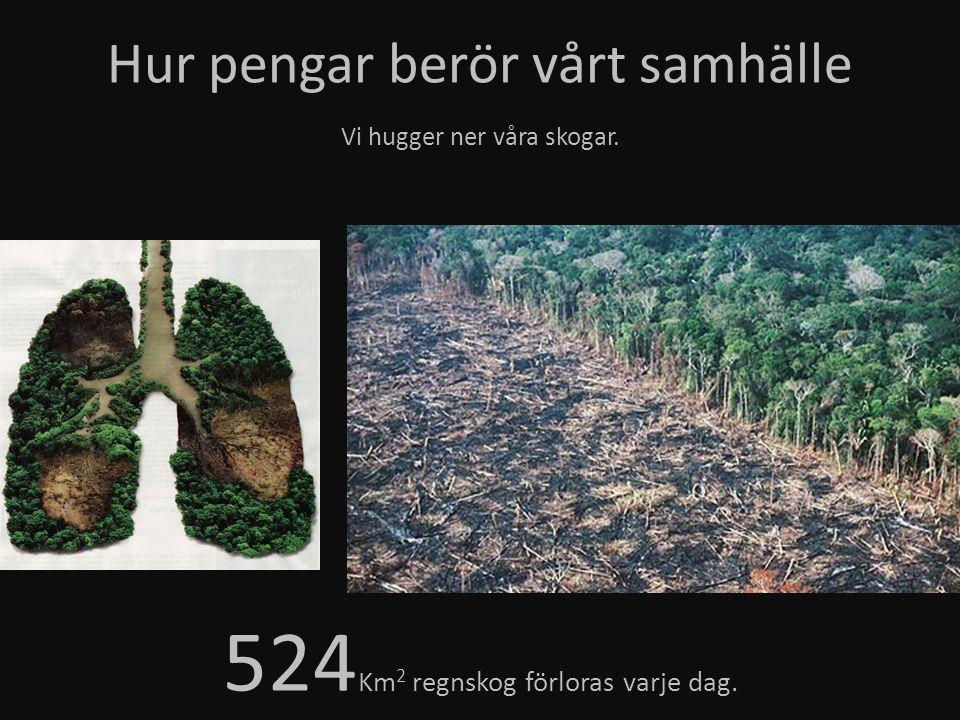 524Km2 regnskog förloras varje dag.