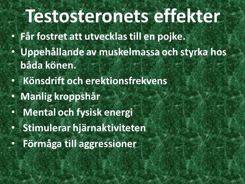 Testosteronets effekter
