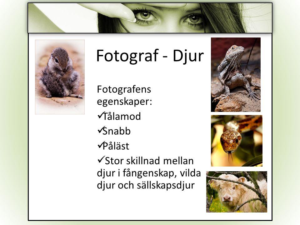 Fotograf - Djur Fotografens egenskaper: Tålamod Snabb Påläst